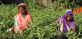 Hopes shine among the flood-hit farmers of Gorakhpur