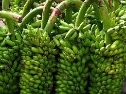 GI certified Jalgaon banana exported to Dubai