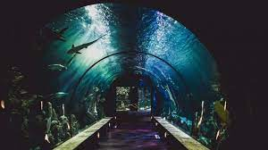 Indian Railways gets its first movable freshwater tunnel aquarium