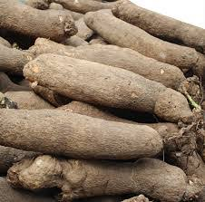 Labourer gets 12 months jail term for stealing yams in Osun