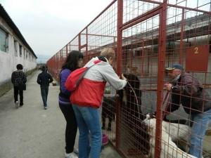 Asyl Hunde Stupini