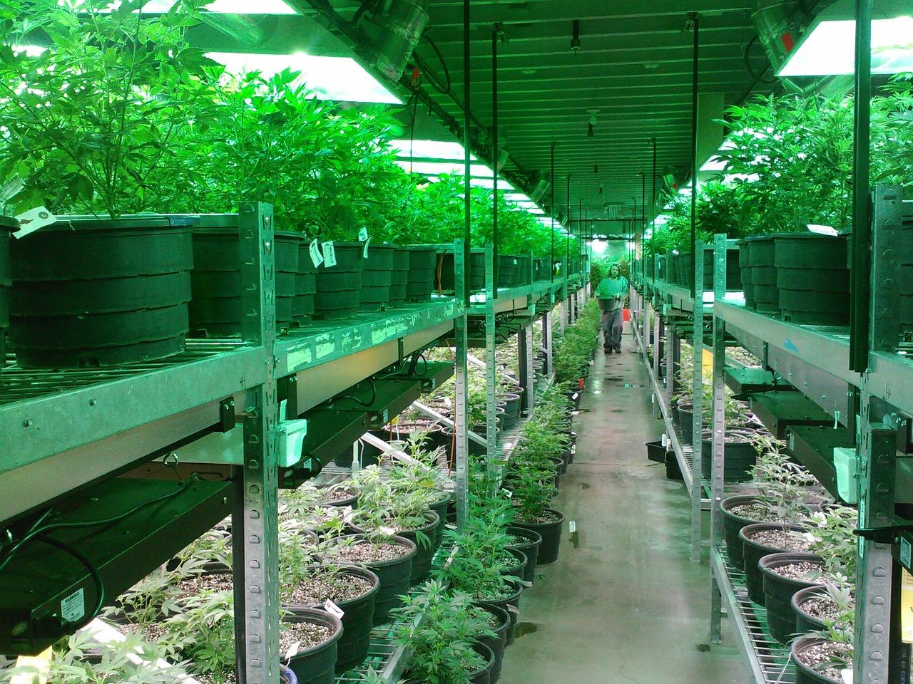 Cannabis POS Provider Green Bits Raises $2.2 Million
