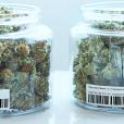 Cannabis management software Trellis Solutions Closes $2 Million