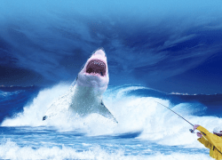 Shark is an iPhone and iPad augmented reality app that allows users to see sharks everywhere.