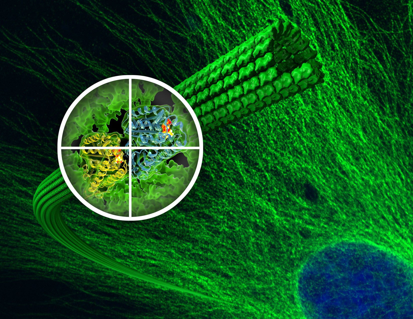 Image result for microtubules