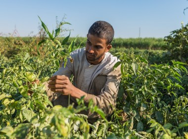 Egypt's Agricultural Exports Rise to 4.3 Million Tons
