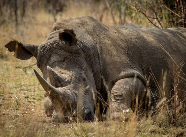 Free State Farm owner Apprehend Two Poachers (News Central TV)