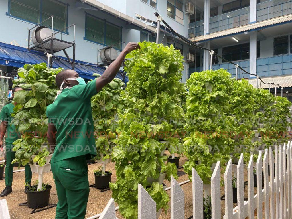 A worker tends to the garden at the San Fernando General Hospital. - Narissa Fraser