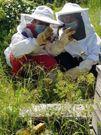 Vaulx-en-Velin | ASSociation APIcole vaudaise > disponible pour récupérer des essaims d'abeilles
