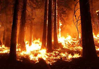 California governor signs bill giving prisoners battling wildfires a shot at becoming pro firefighters