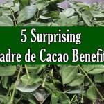 Madre de Cacao Benefits
