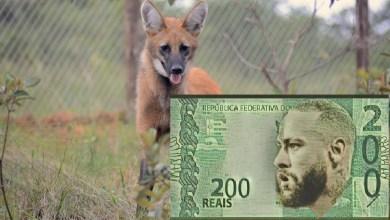 Brasil Terá Nota de 200 Reais Com Lobo-Gurá, o Que Pode Ser Ruim?