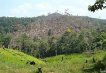 Deforested Region