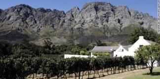 Vineyards Lead