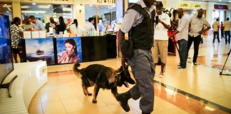 A security guard patrols at Westgate shopping mall with his sniffer dog, in Nairobi, Kenya, on July 18, 2015. Kenya's upscale shopping mall, Westgate, which had been closed nearly two years ago after a terrorist attack that claimed 67 lives, was reopened on Saturday amid tight security.(Xinhua/Pan Siwei)
