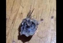 An Oklahoma woman pulled this object out of her belly button, which is either very concerning or the worst magic trick of all time. Screenshot: It Has Its Own Hair/YouTube