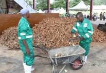Cassava Production