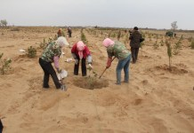 Local villagers plant trees for shelter forest. (All photos above are provided the Habahu National Nature Reserve)