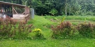 Economics Acquaculture Covid