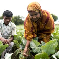 WB endorses $202m to improve Bangladesh's food security