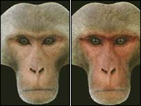 //newsimg.bbc.co.uk/media/images/39308000/jpg/_39308323_monkey_composite.jpg' cannot be displayed]
