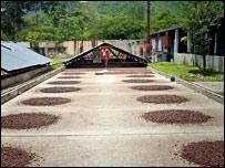 Los comparadores europeos han puesto sus ojos en el cacao venezolano.