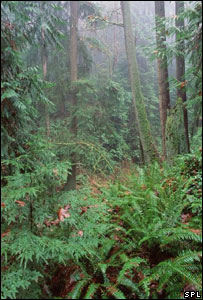 Forest (Image: Science Photo Library)