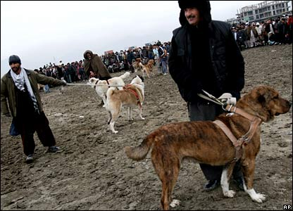 Afghan men wait with their dogs in the capital, Kabul, for a dog-fighting match