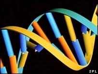 Gráfica de ADN