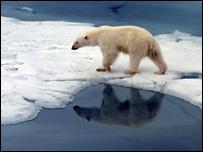 Oso polar fotografiado en la región noruega de Svalbard