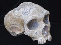 Neanderthal skull from Forbes Quarry, Gibraltar  Image: Gibraltar Museum
