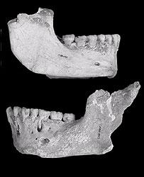 Neanderthal jawbones from El Sidron. Image: PNAS.