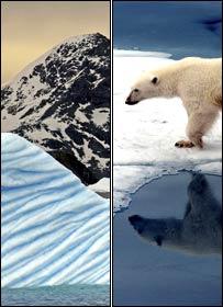 Antártida a la izquierda y oso polar en el Ártico a la derecha.