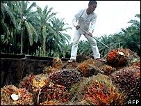 Un trabajador en una plantación en Indonesia.