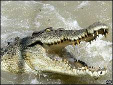 Saltwater crocodile (file picture)