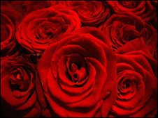 A bouquet of red roses
