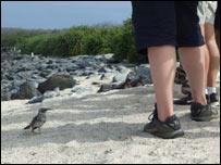 Turistas en las islas Galápagos.