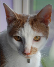 From BBCs Inside Out program - This cat's name is George, and was successfully registered with three hypnotherapy organisations.