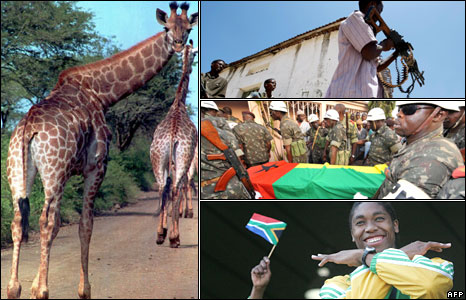 A giraffe (left), Islamist militants (top right), the coffin of Guinea-Bissau's leader Joao Bernardo Vieira (right centre) and South African athlete Caster Semenya