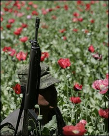 A Mexican soldier guards an opium poppy field during eradication  in Morelia, Mexico, 4 March 2010