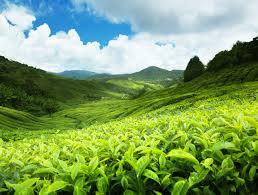 Sri Lanka seeks duty free access for tea, apparel in India, China