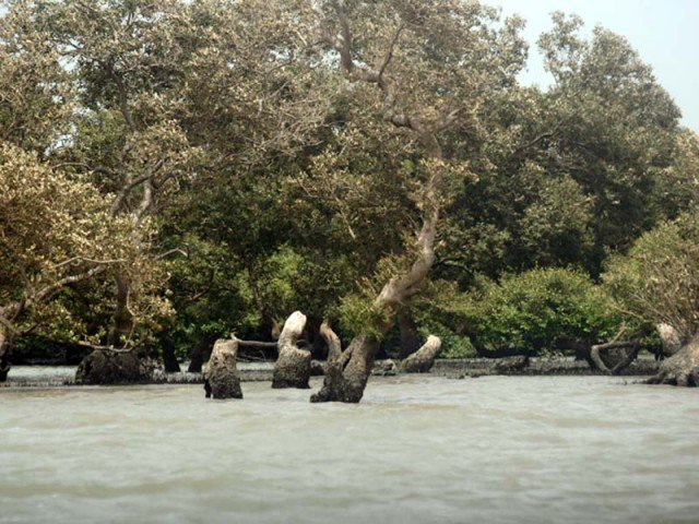 Pakistani province breaks record by planting more than one million mangroves in 24 hours