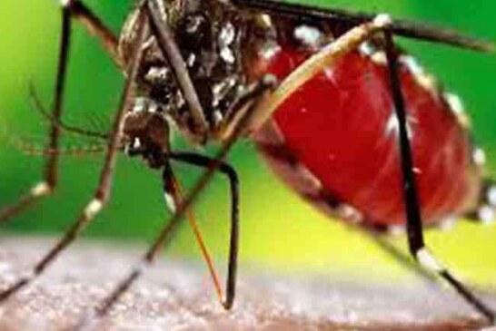 उत्तराखंड में डेंगू का अटैक, सैकड़ा पार हुआ मरीजों का आंकड़ा