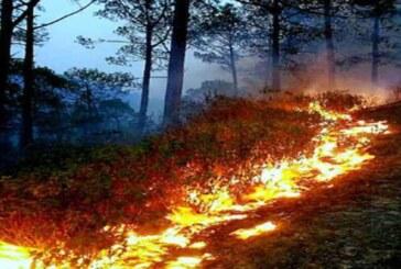 जंगलों में आग हो रही विकराल, वन विभाग लाचार; सरकार से मांगे हेलीकॉप्टर