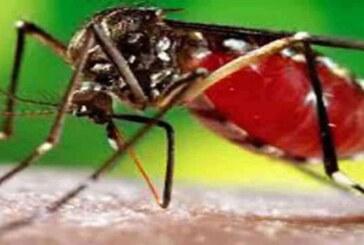 देहरादून में 19 और लोगों में डेंगू की पुष्टि हुई