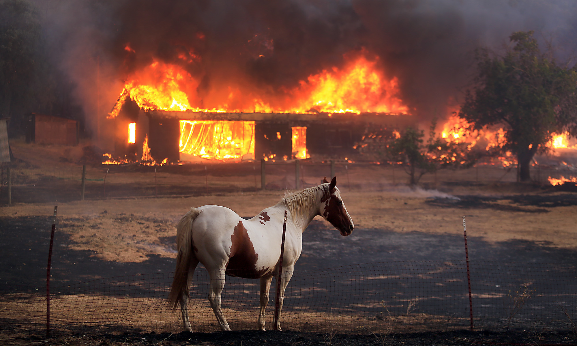 dozens of horses burned alive in california wildfires 3