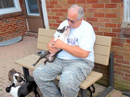Tom Davis, owner of Davane Kennel gets a kiss from Evee at the kennel Sunday, Aug 19, 2018 in Ohioville. For 39 years Tom and Joyce Davis have been raising Boston Terriers. (Lake Fong/Post-Gazette)