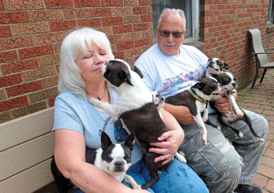 Joyce Davis, owner of Davane Kennel gets a kiss from Jamme, a grand champion at the kennel Sunday, Aug 19, 2018 in Ohioville. For 39 years Tom and Joyce Davis have been raising Boston Terriers. (Lake Fong/Post-Gazette)