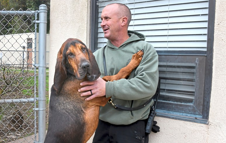 Cappy, a 20-month-old bloodhound, with his K9 partner, Officer Kevin Merkel in the training area at the Pittsburgh Police & Fire Training Academy. Cappy is the newest member of the department's K9 unit. (Darrell Sapp/Post-Gazette)