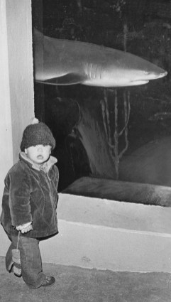 December 29, 1972: Shark watching at AquaZoo is Noah Umholtz of Regent Square.